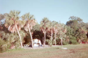 Campsite at Ft. DeSoto Park.